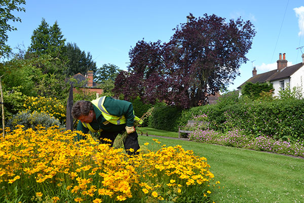 Man weeding flowers